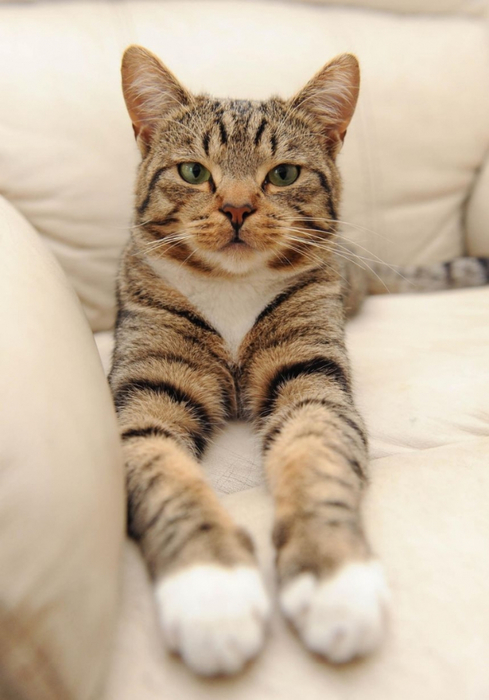 кот защитил ребенка 3 (489x700, 267Kb)