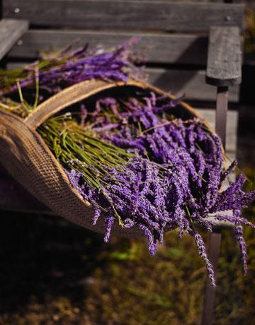 lavender-basket-0908-de-59861936 (500x600, 139Kb)