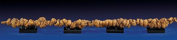 экскрементов динозавров фото 1 (700x161, 108Kb)