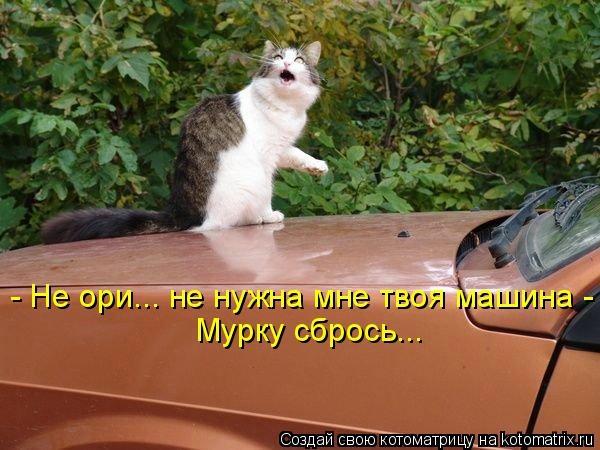 112336017_large_kotomatritsa_y (600x450, 147Kb)