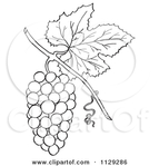 Превью 1129286-Cartoon-Clipart-Of-An-Outlined-Bunch-Of-Grapes-With-A-Leaf-Black-And-White-Vector-Coloring-Page (450x470, 91Kb)