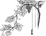Превью grapevine-clip-art_f (1) (425x334, 81Kb)