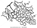 Превью stock-vector-grape-drawing-82150066 (450x337, 91Kb)