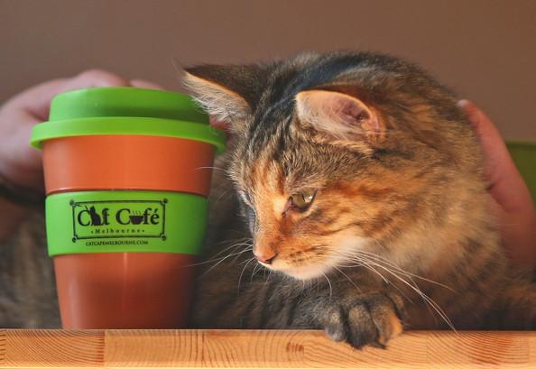 кошачье кафе в мельбурне 2 (594x409, 189Kb)