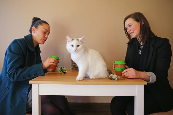 кошачье кафе в мельбурне 5 (594x396, 136Kb)