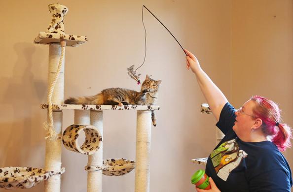 кошачье кафе в мельбурне 7 (594x390, 164Kb)