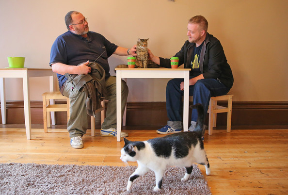 кошачье кафе в мельбурне (594x402, 206Kb)