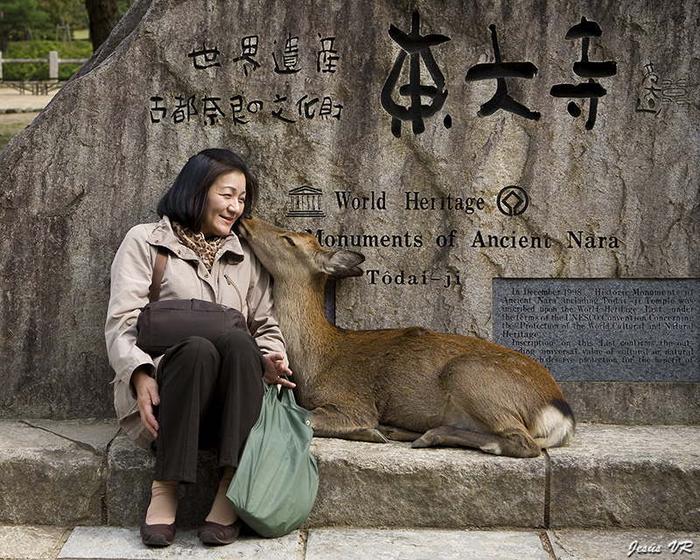 олени в японском городе нара фото 12 (700x560, 425Kb)