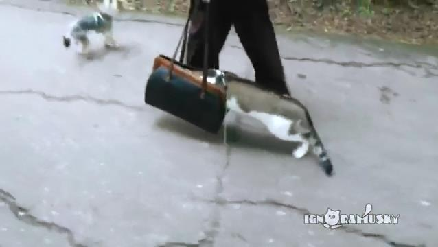 3821971_The_cat_first_time_outside__ (638x360, 18Kb)