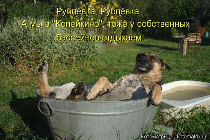 1918486_1379174851_kotmatrix_18 (700x468, 88Kb)
