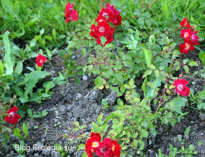 3241858_flowers310 (700x535, 108Kb)