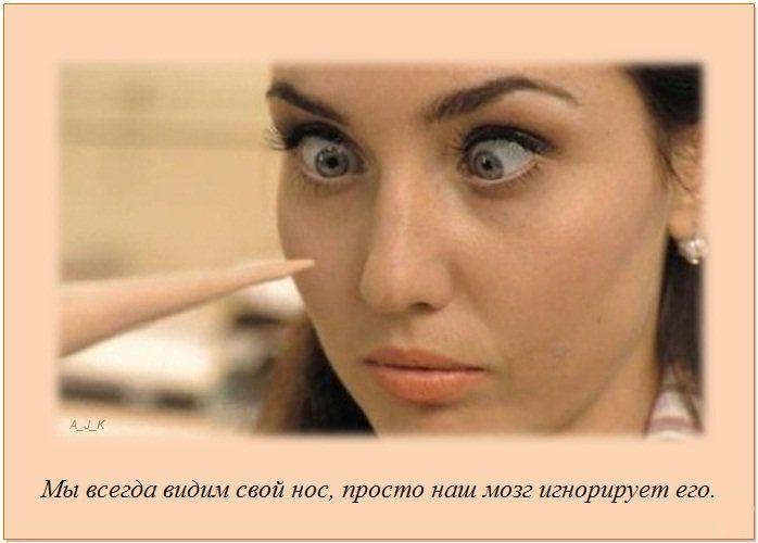 http://img0.liveinternet.ru/images/attach/c/11/115/285/115285152_2.jpg