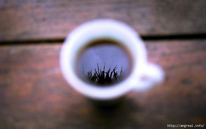 15 способов использования кофейной гущи