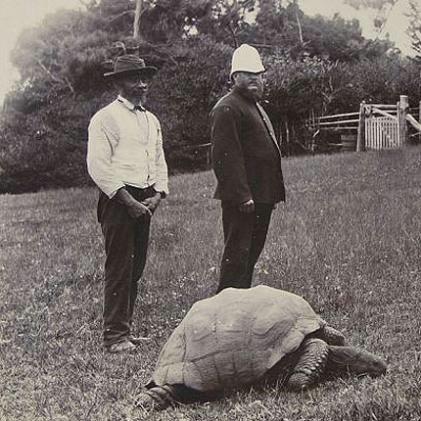 черепаха джонотан фото 5 (421x421, 104Kb)