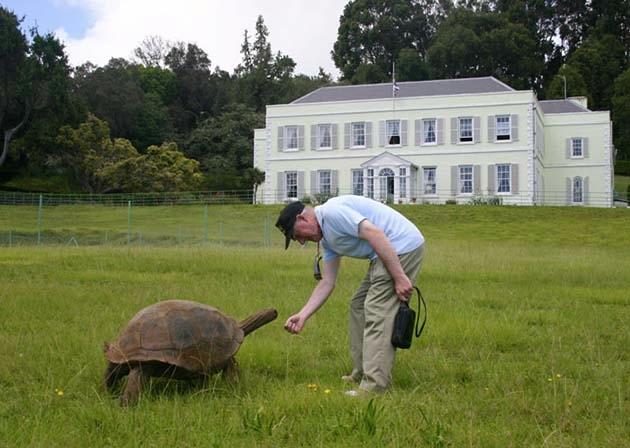 черепаха джонотан фото 6 (630x448, 144Kb)