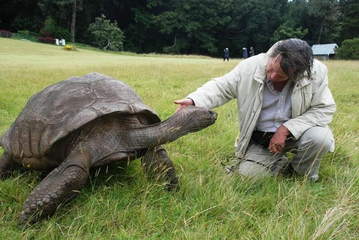 черепаха джонотан фото 7 (700x468, 295Kb)
