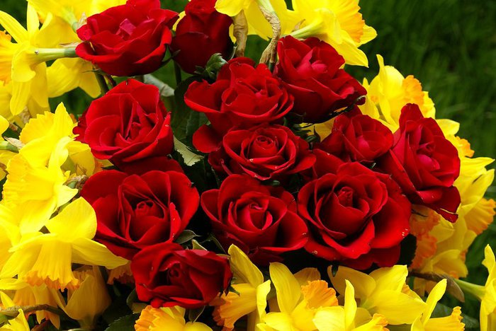 red-roses-and-narcissus-bouquet-dsc01441 (700x468, 79Kb)