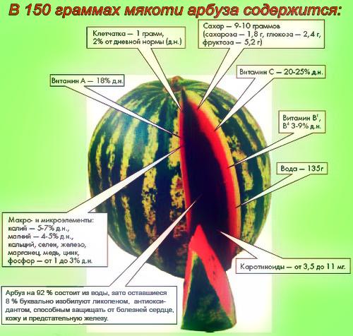Состав-арбуза (500x476, 302Kb)
