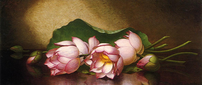 1354666068-egyptian-lotus-blossom (700x295, 233Kb)