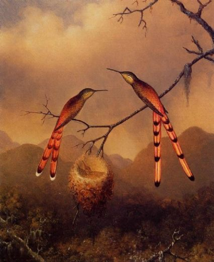 martin-johnson-heade-two-hummingbirds-with-their-young-23901 (426x520, 160Kb)