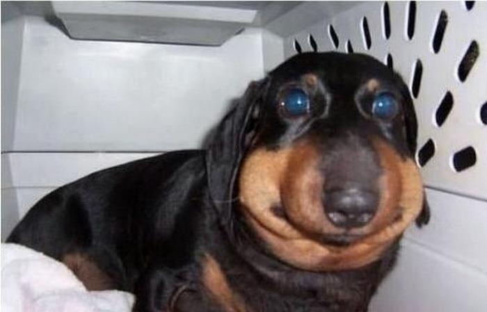 смешные фото собак 3 (700x449, 211Kb)