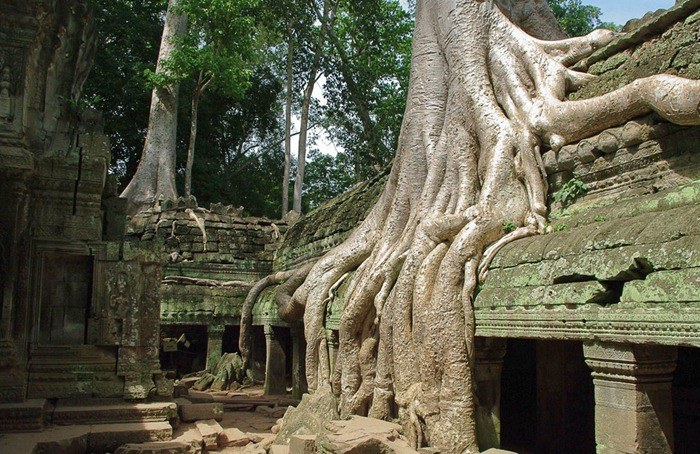 ta-prohm-3 (700x454, 422Kb)