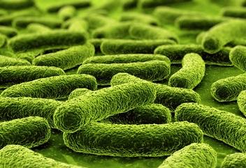 probiotiki (352x240, 63Kb)