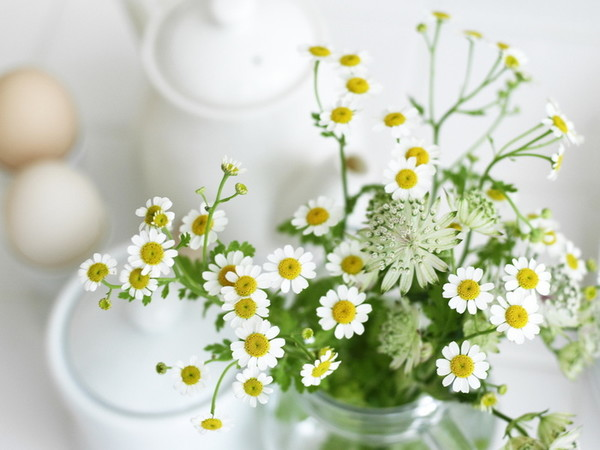 4897960_114425364_Nature___Flowers_Small_daisies_032297_1 (600x450, 60Kb)