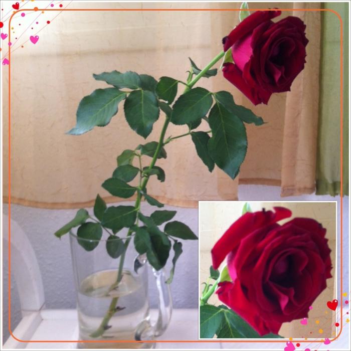 Роза для медитации/2626622_IMG_5881 (700x700, 291Kb)