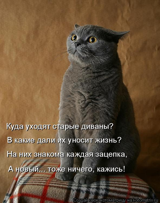 kotomatritsa_b (1) (551x700, 309Kb)