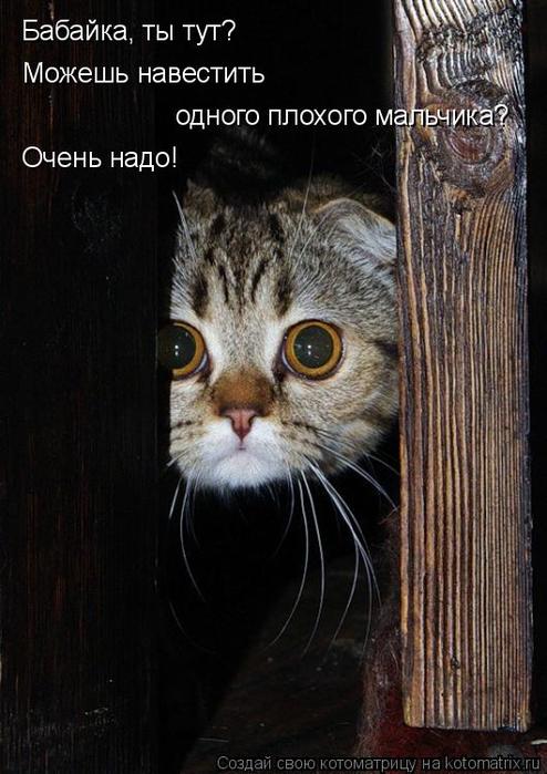 kotomatritsa_dx (494x700, 304Kb)