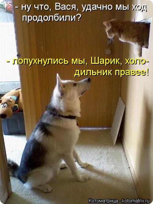 kotomatritsa_x_ (500x668, 264Kb)