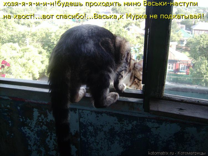 kotomatritsa_zJ (700x524, 381Kb)