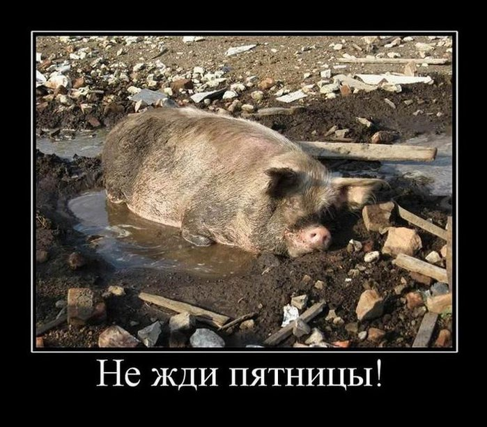 5680197_2066Nezhdipyatnitsy (700x613, 104Kb)