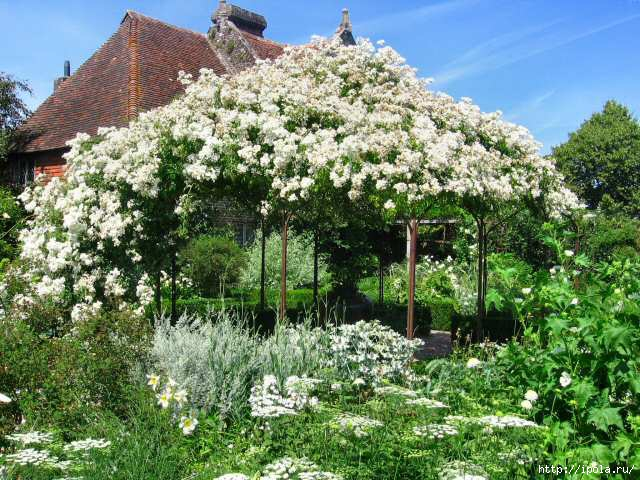 2835299_sissinghurst2006_white_Garden (640x480, 245Kb)