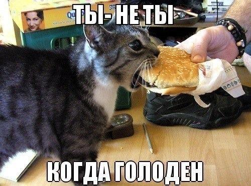 кот (500x372, 204Kb)