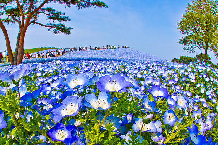 hitachi-park-1 (700x466, 235Kb)