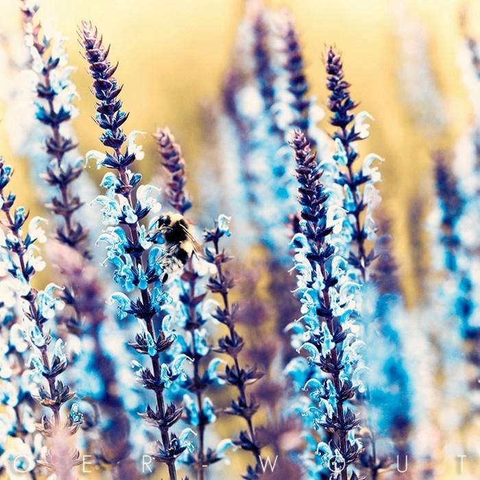 Профессиональные цветов и природы