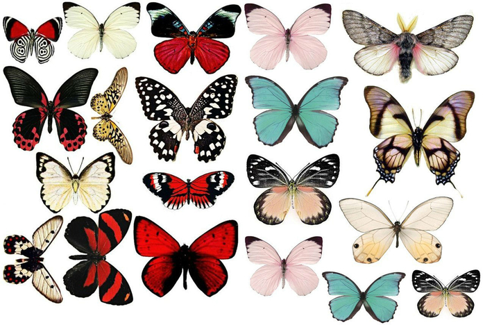 Шаблоны бабочек для открыток