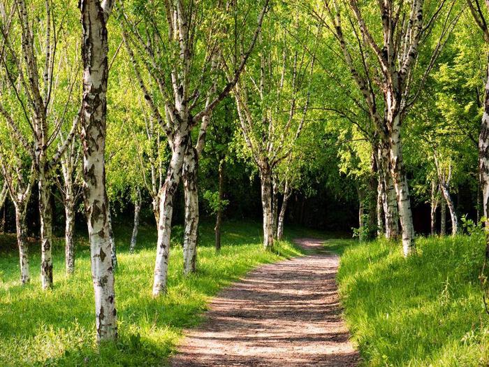 лес 14 (700x525, 622Kb)