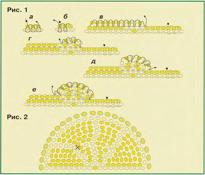 Схемы плетения из бисера долек
