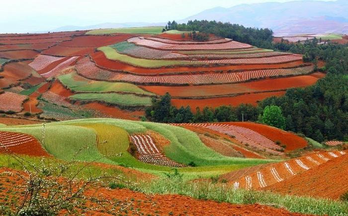 поля Дончуань китай фото 2 (700x435, 399Kb)