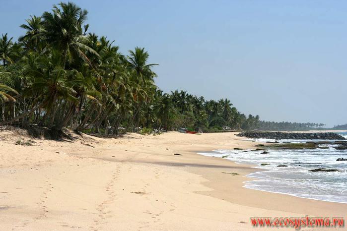2286902_Shri_Lanka (700x466, 46Kb)