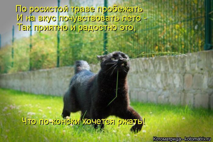 kotomatritsa_4 (700x465, 375Kb)