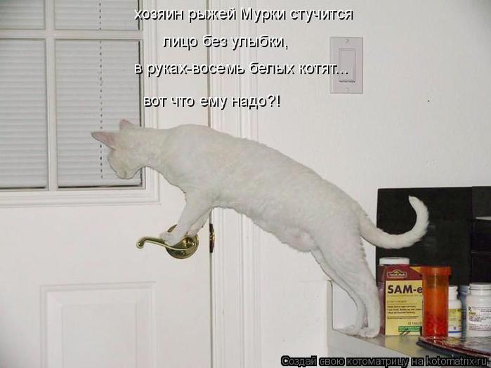 kotomatritsa_7H (1) (700x524, 211Kb)