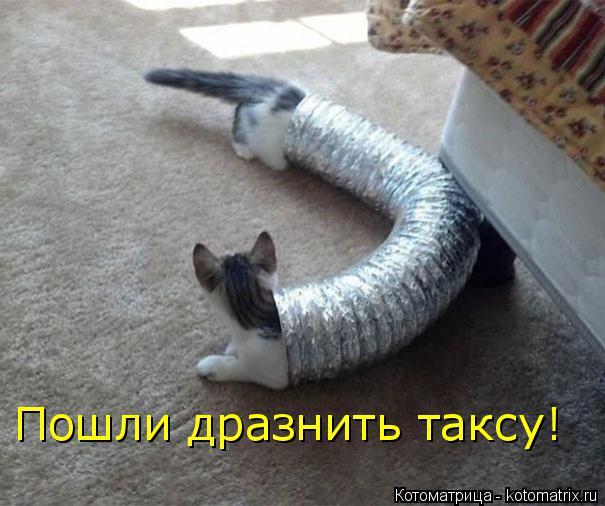 kotomatritsa_w (605x506, 204Kb)