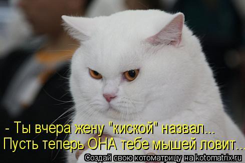 kotomatritsa_z5 (489x326, 119Kb)
