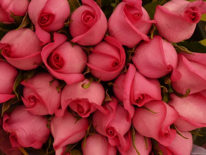1407963961_roses11 (700x525, 101Kb)