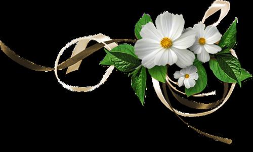 белые цветы (500x301, 132Kb)