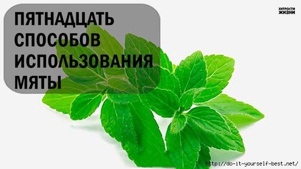 neS_w1jrLV4 (604x339, 88Kb)